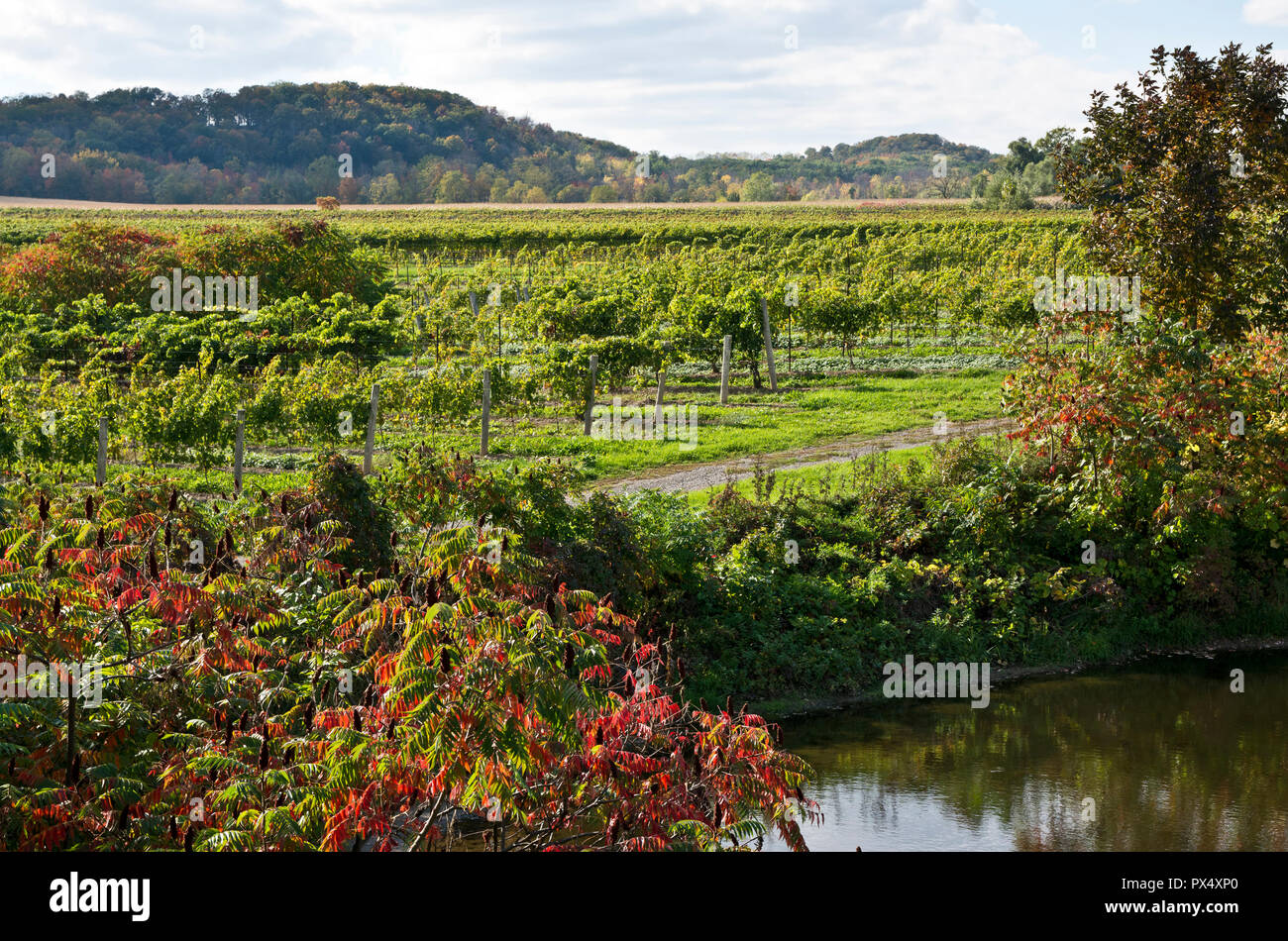 beautiful-vineyards-and-pond-near-beamsv