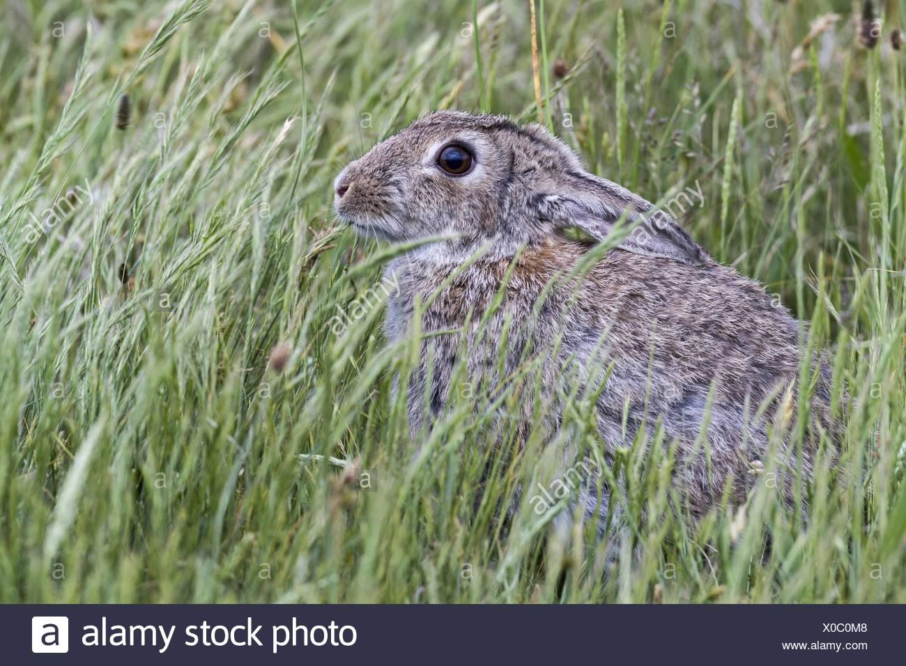 Atemberaubend Maschendraht Kaninchen Zeitgenössisch - Die Besten ...