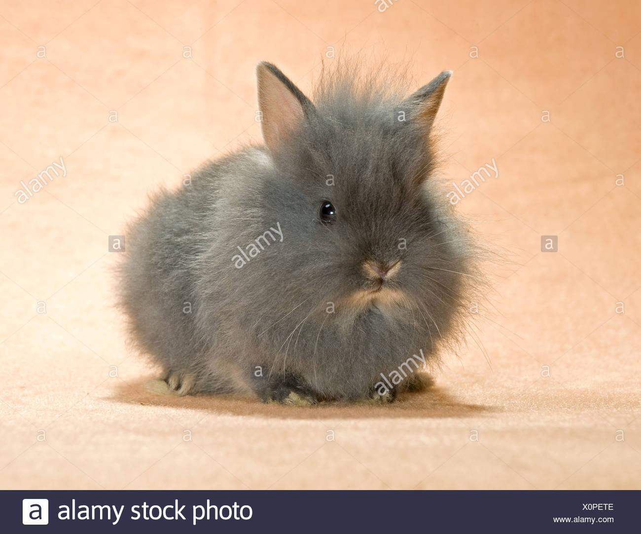 Großartig Draht Kunst Kaninchen Fotos - Elektrische Schaltplan-Ideen ...