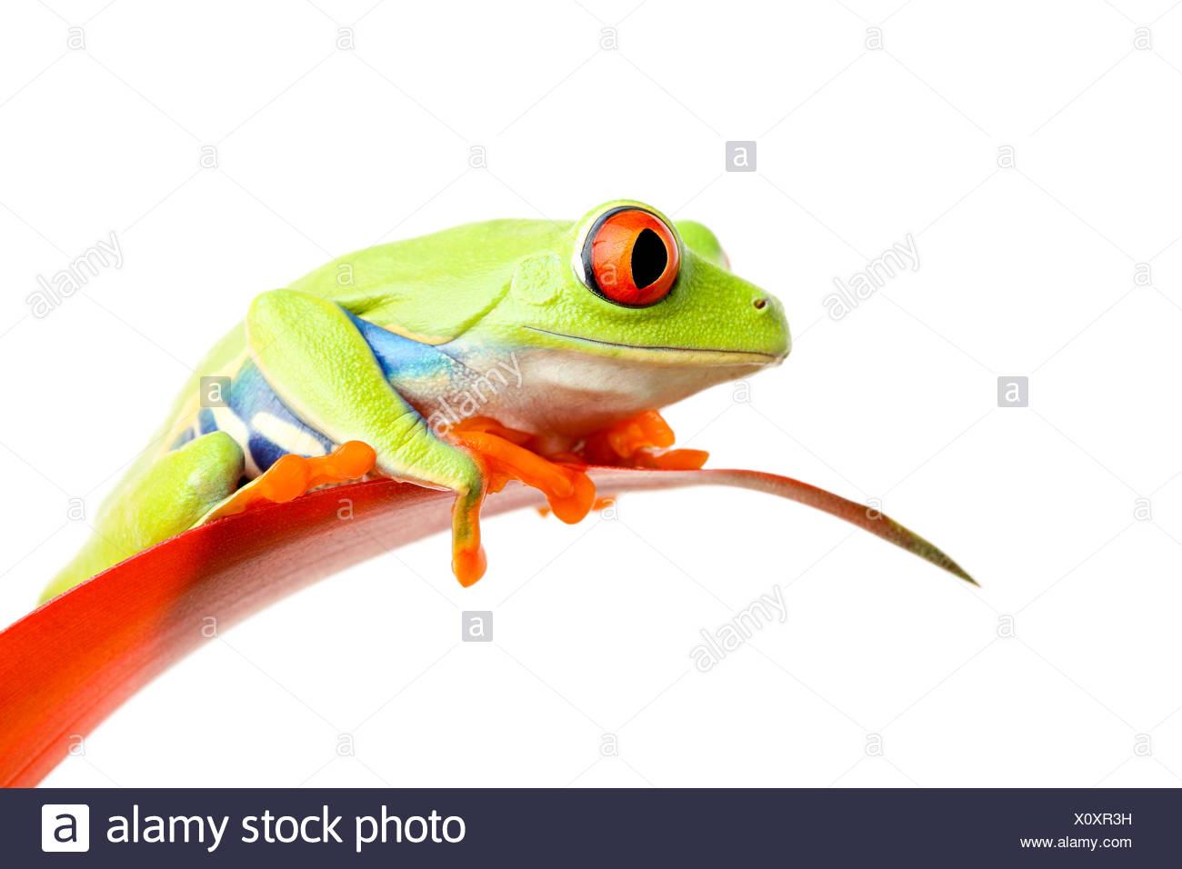 Charmant Frosch Färbung Bilder Zeitgenössisch - Malvorlagen Von ...