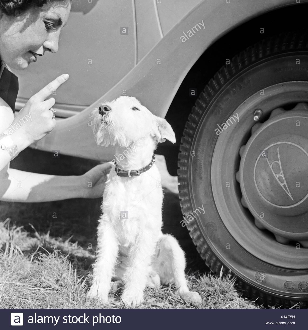 Niedlich Drahthaar Fox Terrier Zu Adoptieren Fotos - Der Schaltplan ...