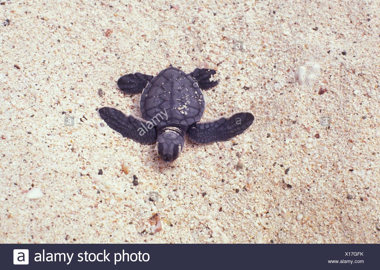 Ungewöhnlich Süsse Meeresschildkröte Färbung Seite Galerie ...