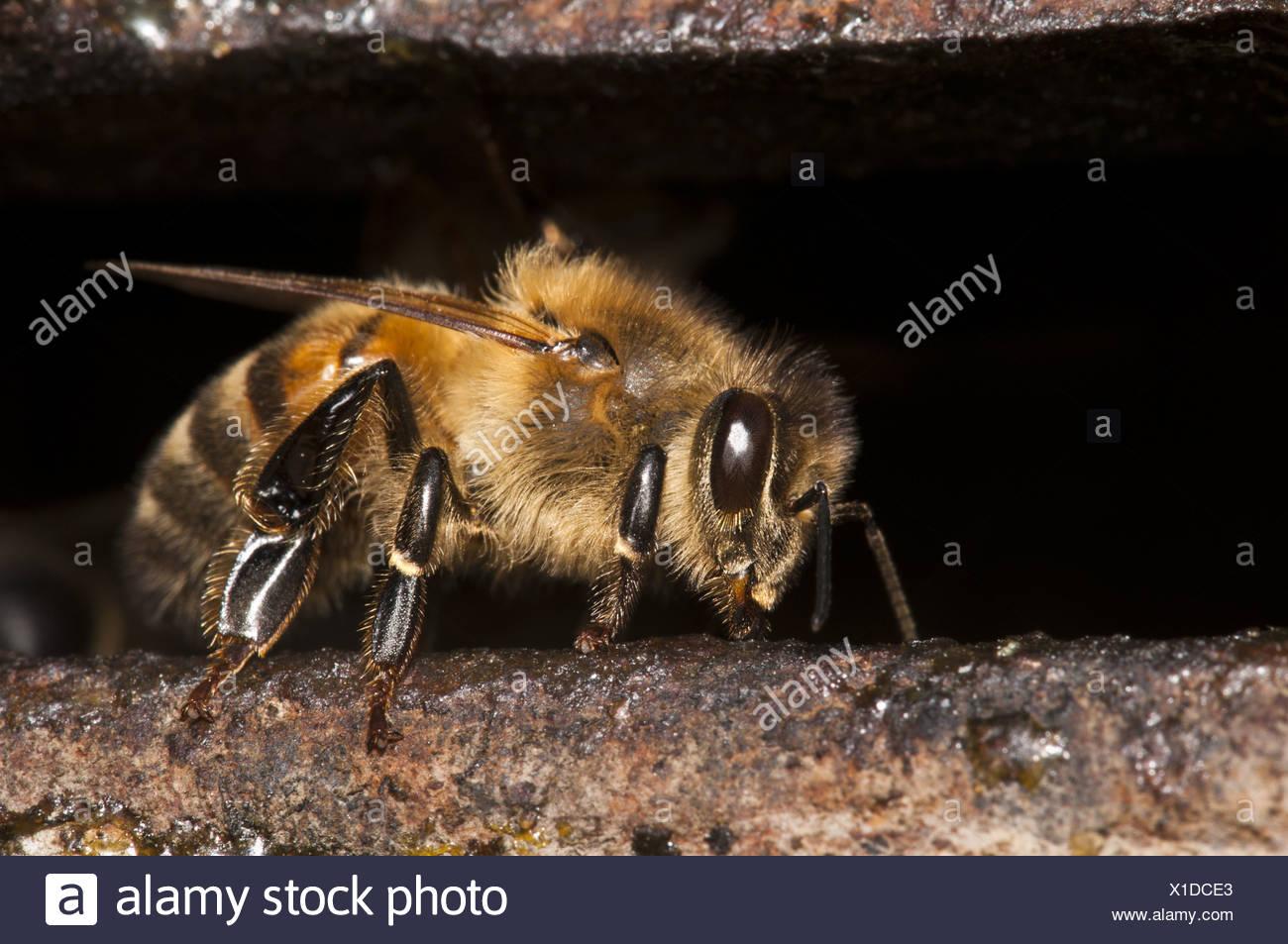 Groß Malvorlagen Für Kinder Mit Honigbienen Bilder - Druckbare ...