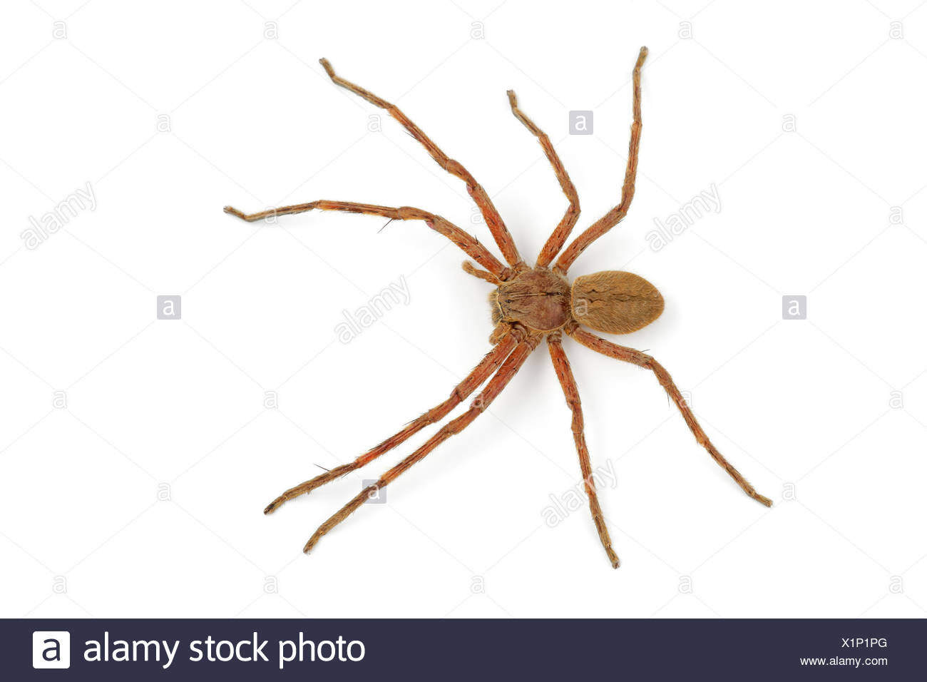 Schön Spinne Färbung Seite Bilder - Malvorlagen Von Tieren - ngadi.info