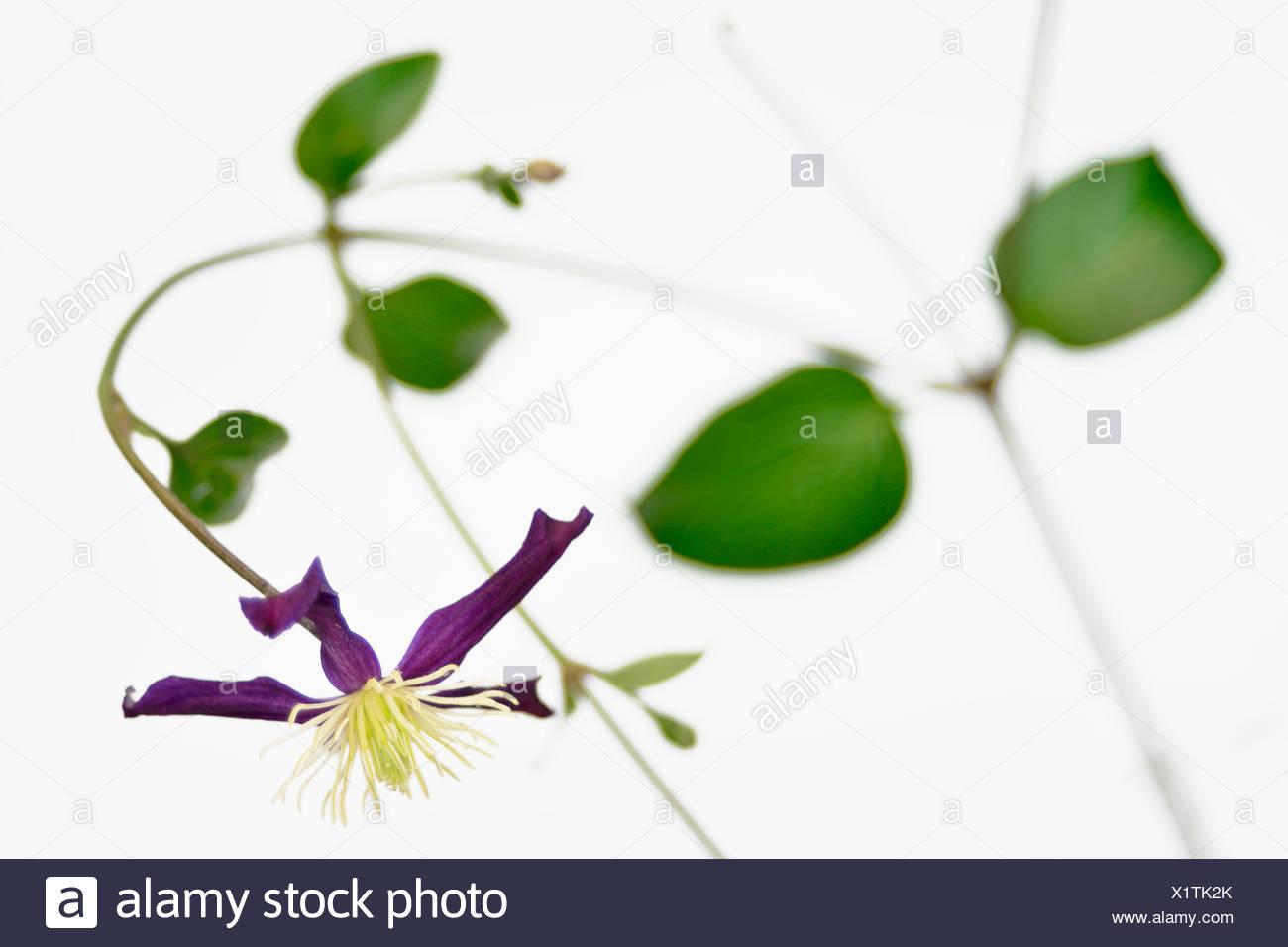 Niedlich Farbe Seite Blume Bilder - Dokumentationsvorlage Beispiel ...
