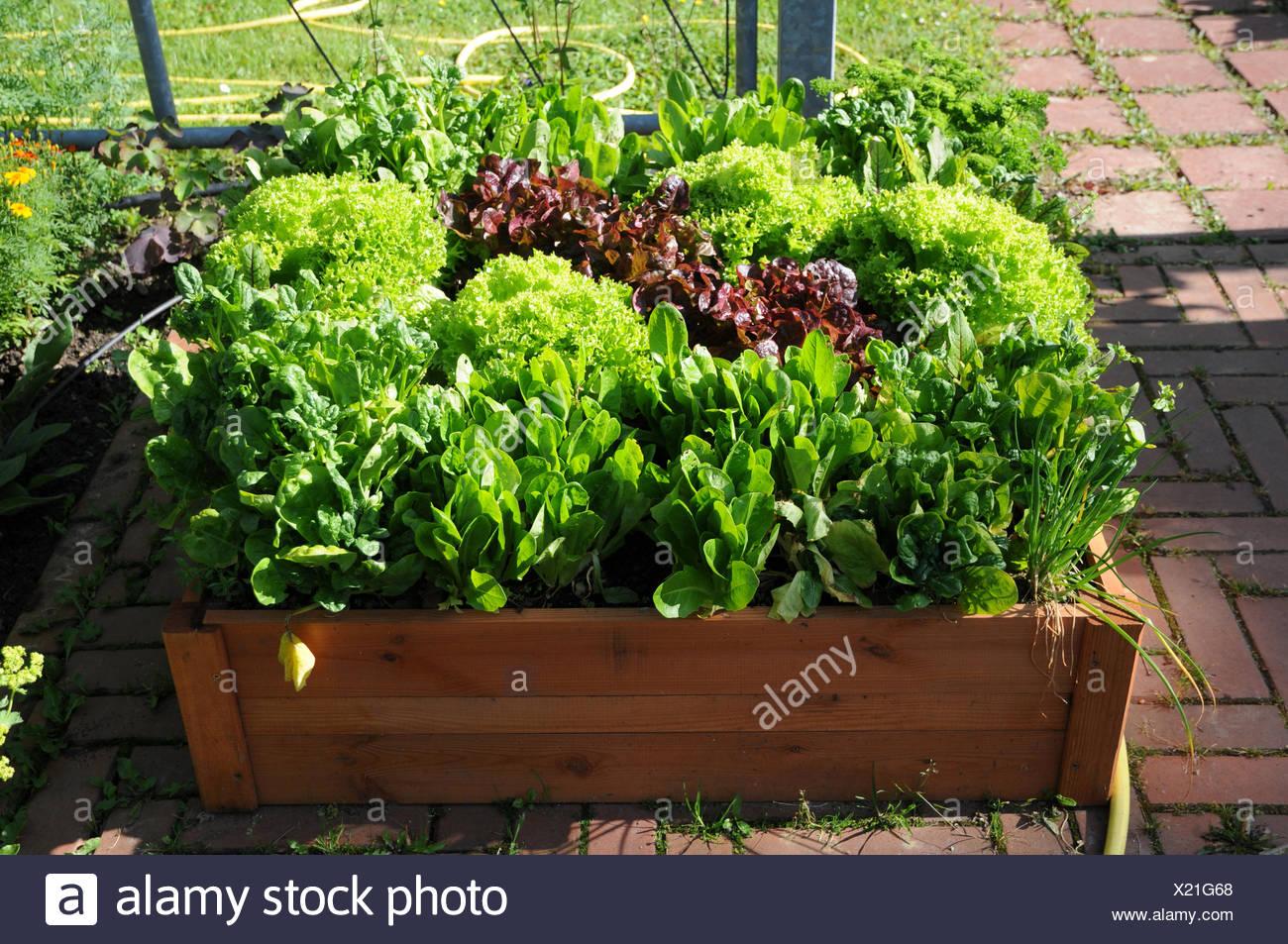 Hochbeet Mit Salat Und Petersilie Stockfoto Bild 276629872 Alamy