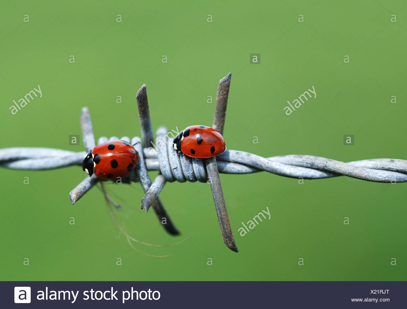 Niedlich Draht Perlen Bugs Bilder - Der Schaltplan - triangre.info