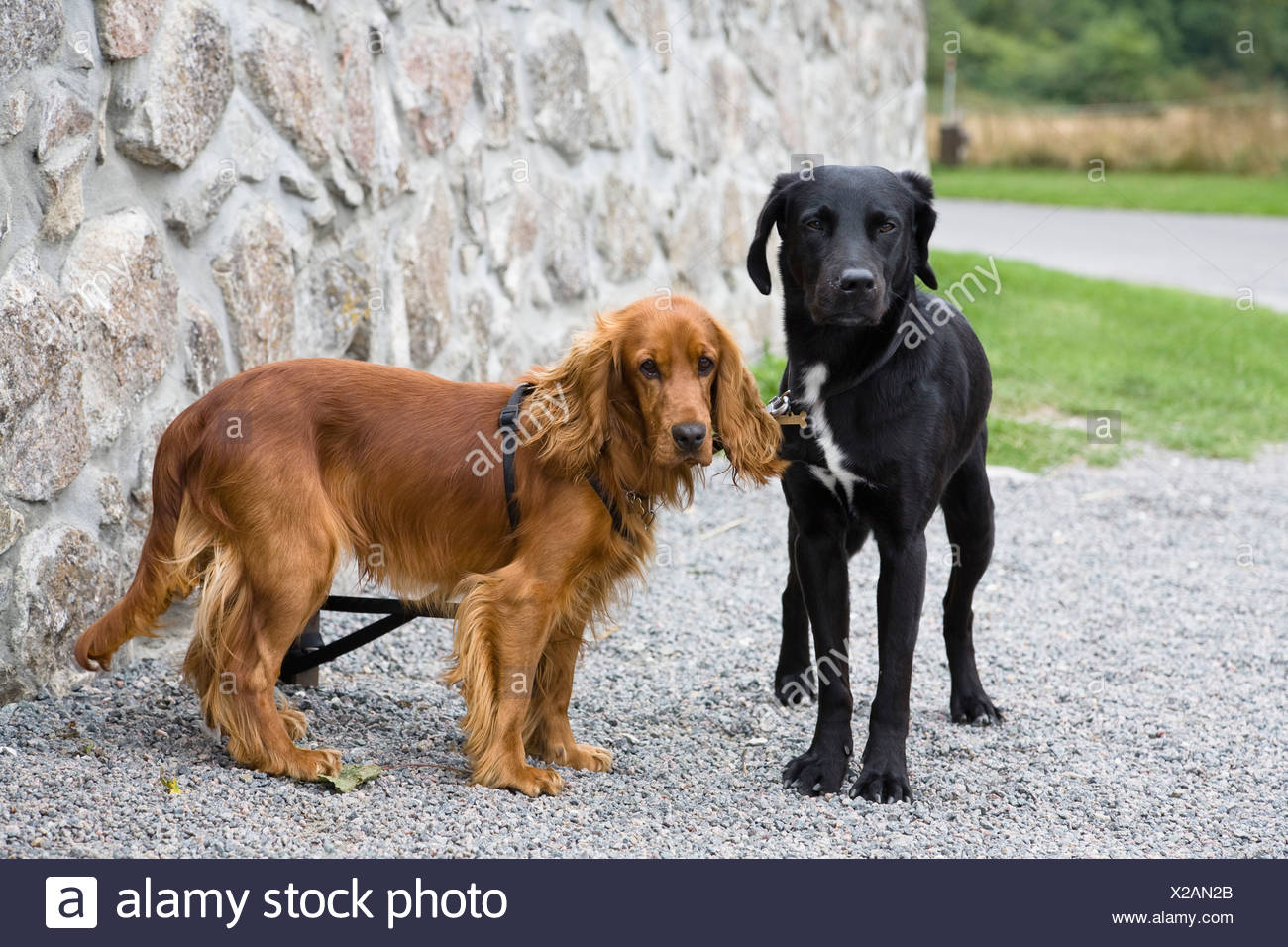 Berühmt Labrador Malvorlagen Zeitgenössisch - Malvorlagen Von Tieren ...