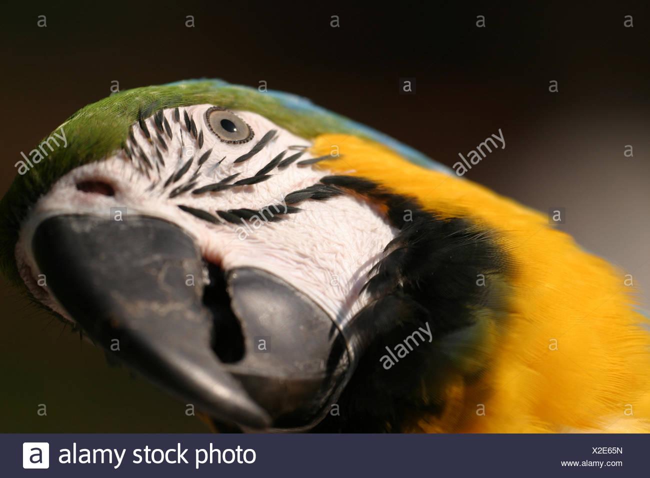 Berühmt Böse Vögel Farbseiten Ideen - Malvorlagen Ideen - blogsbr.info