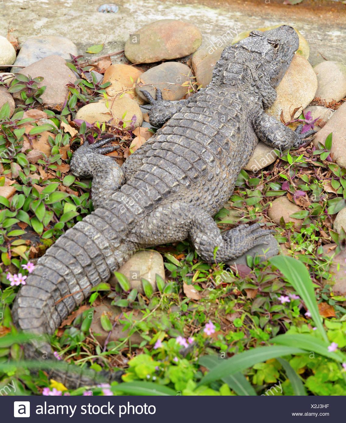 Tolle Krokodil Färbung Seite Galerie - Malvorlagen-Ideen ...