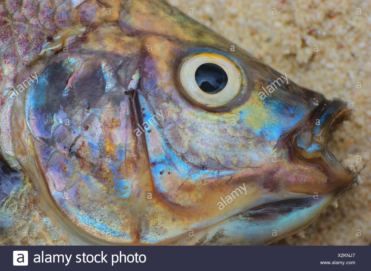 Charmant Fisch Färbung Seite Galerie - Malvorlagen-Ideen ...