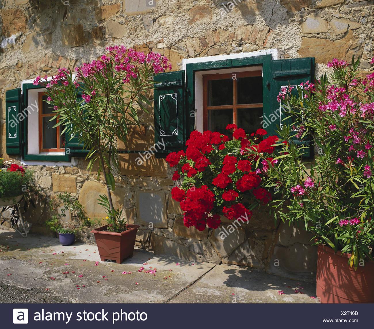 Haus Fassade Blumen Fenster Blumenkasten Geranien Blumentopfe