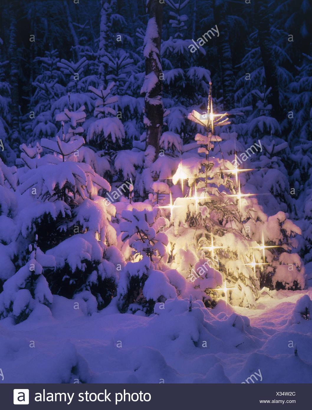 Winter-Holz, Weihnachtsbaum, Nadelwald, Koniferen, tief verschneiten ...