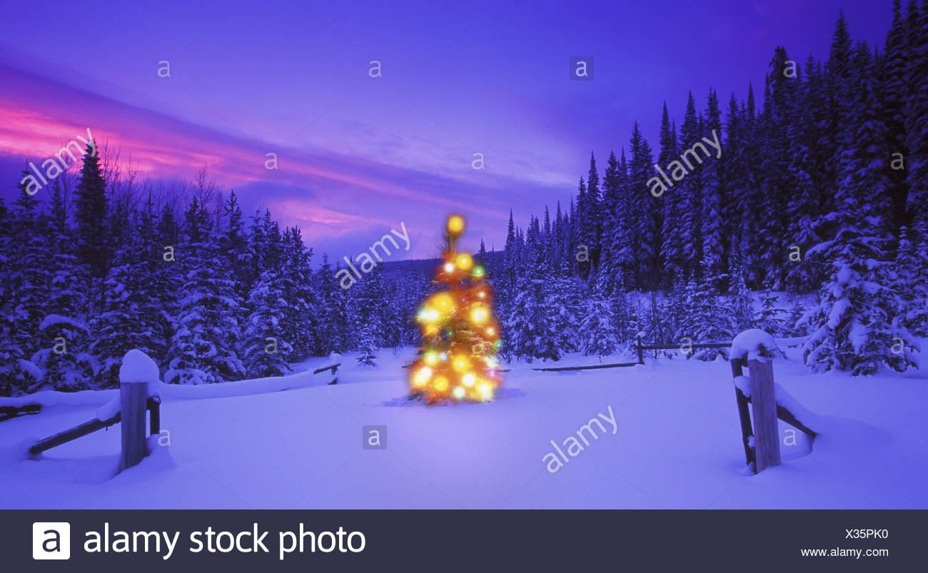 Großzügig Beleuchtete Weihnachtsbäume Im Freien Zeitgenössisch ...