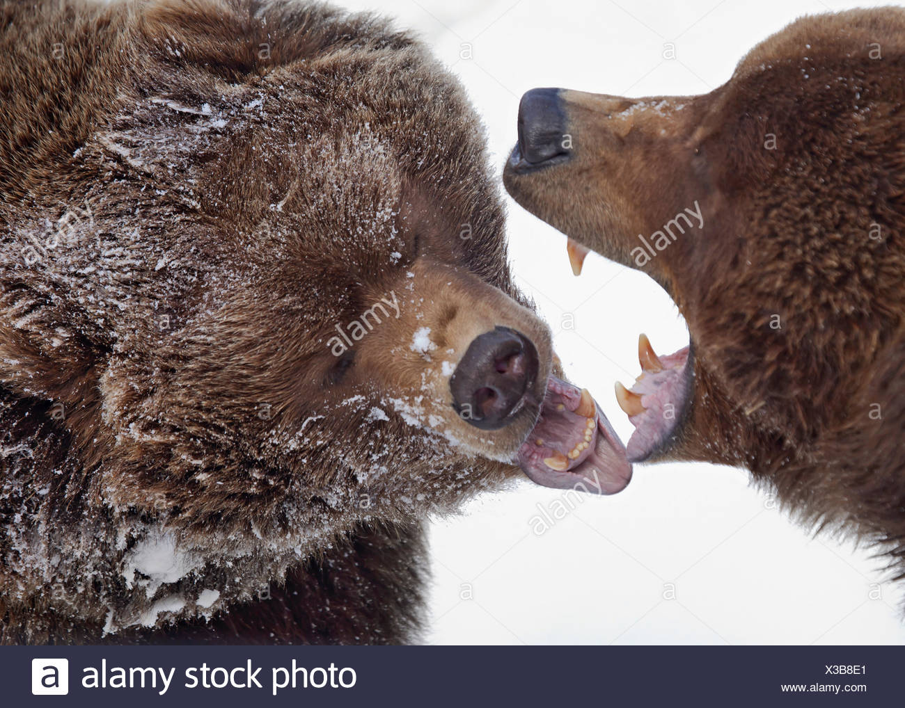 Fantastisch Winterschlaf Tiere Färbung Seiten Fotos - Entry Level ...