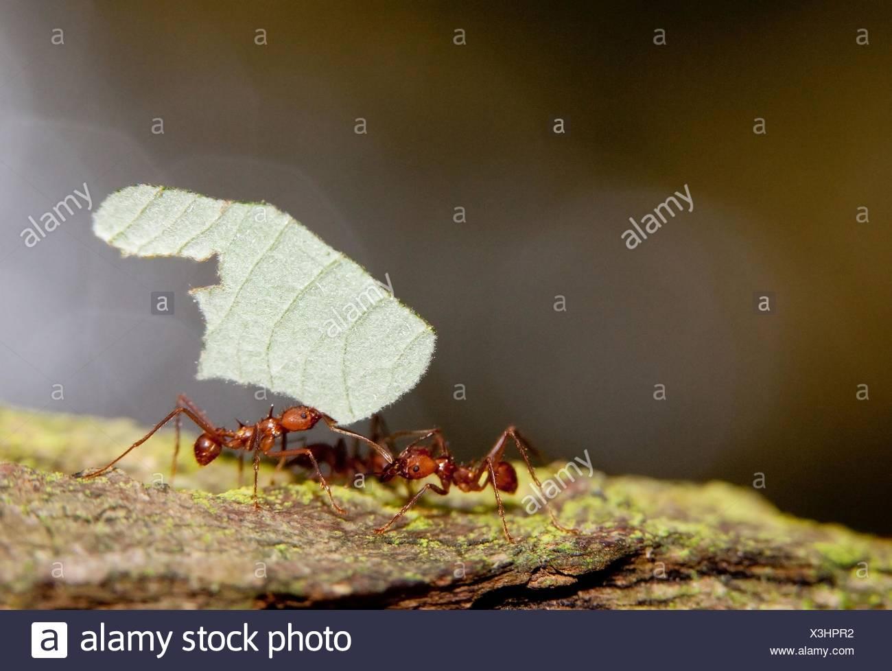 Fantastisch Ameisen Färbung Blatt Bilder - Beispielzusammenfassung ...