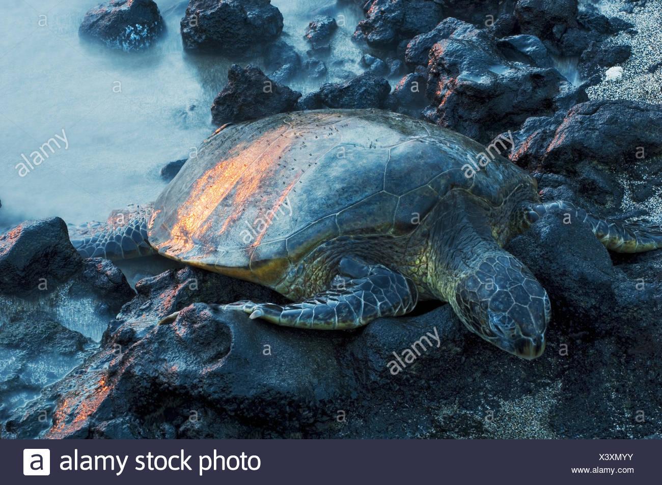 Erfreut Baby Meeresschildkröte Färbung Seite Galerie - Beispiel ...