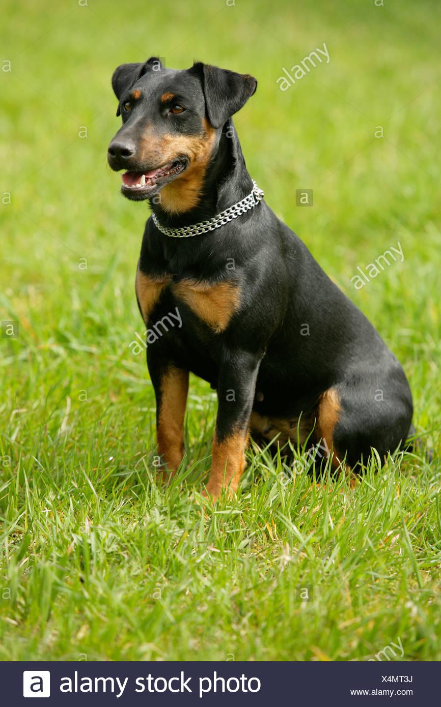 Großzügig Süße Hund Bedruckbare Malvorlagen Galerie - Malvorlagen ...