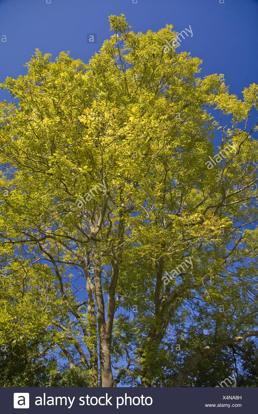 Baum Bäume Herbst herbstliche Muti stammten goldenen gelben Blatt ...