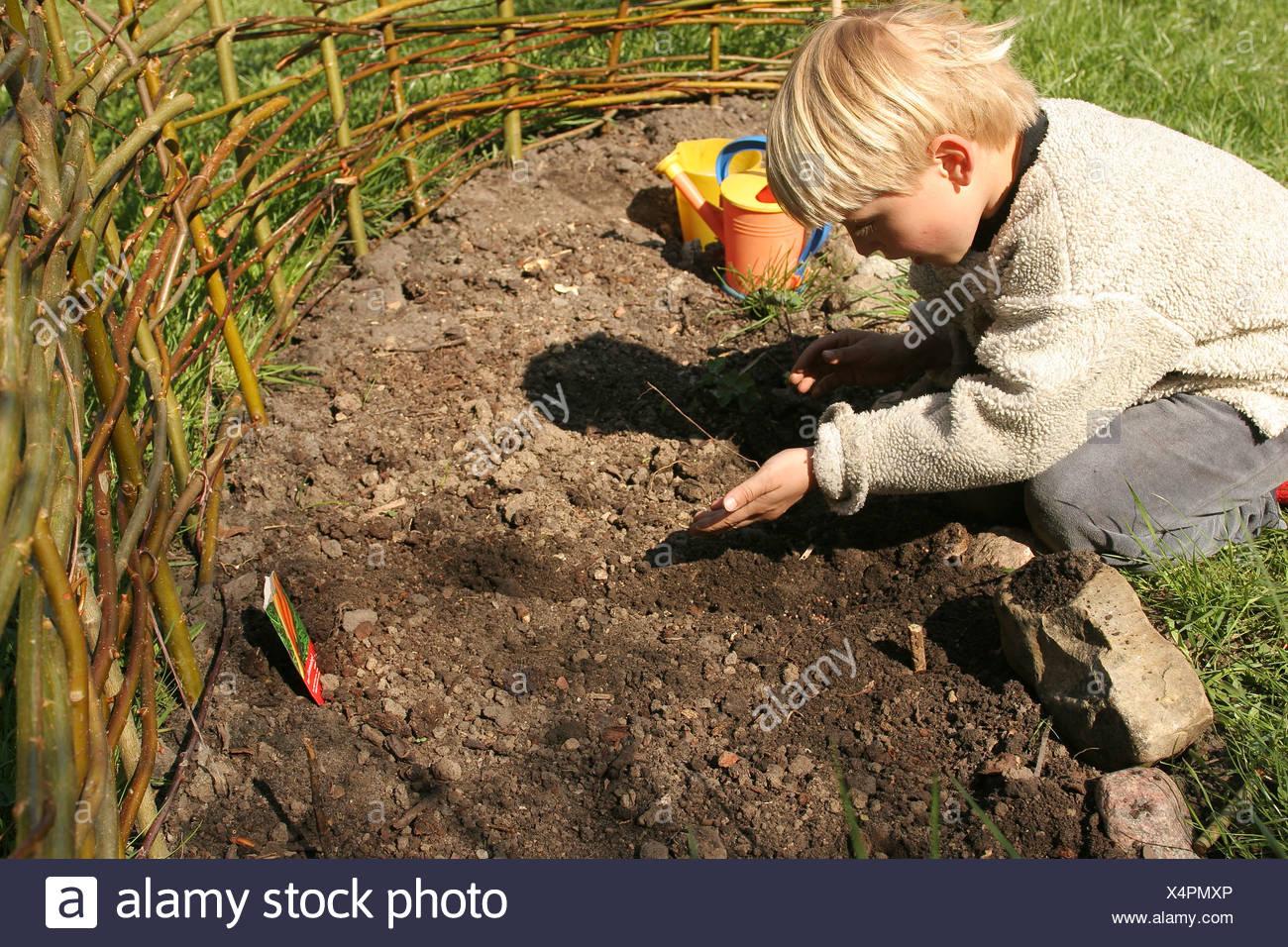 Kleiner Junge Aussaat Karotten Auf Seinen Eigenen Gemusegarten