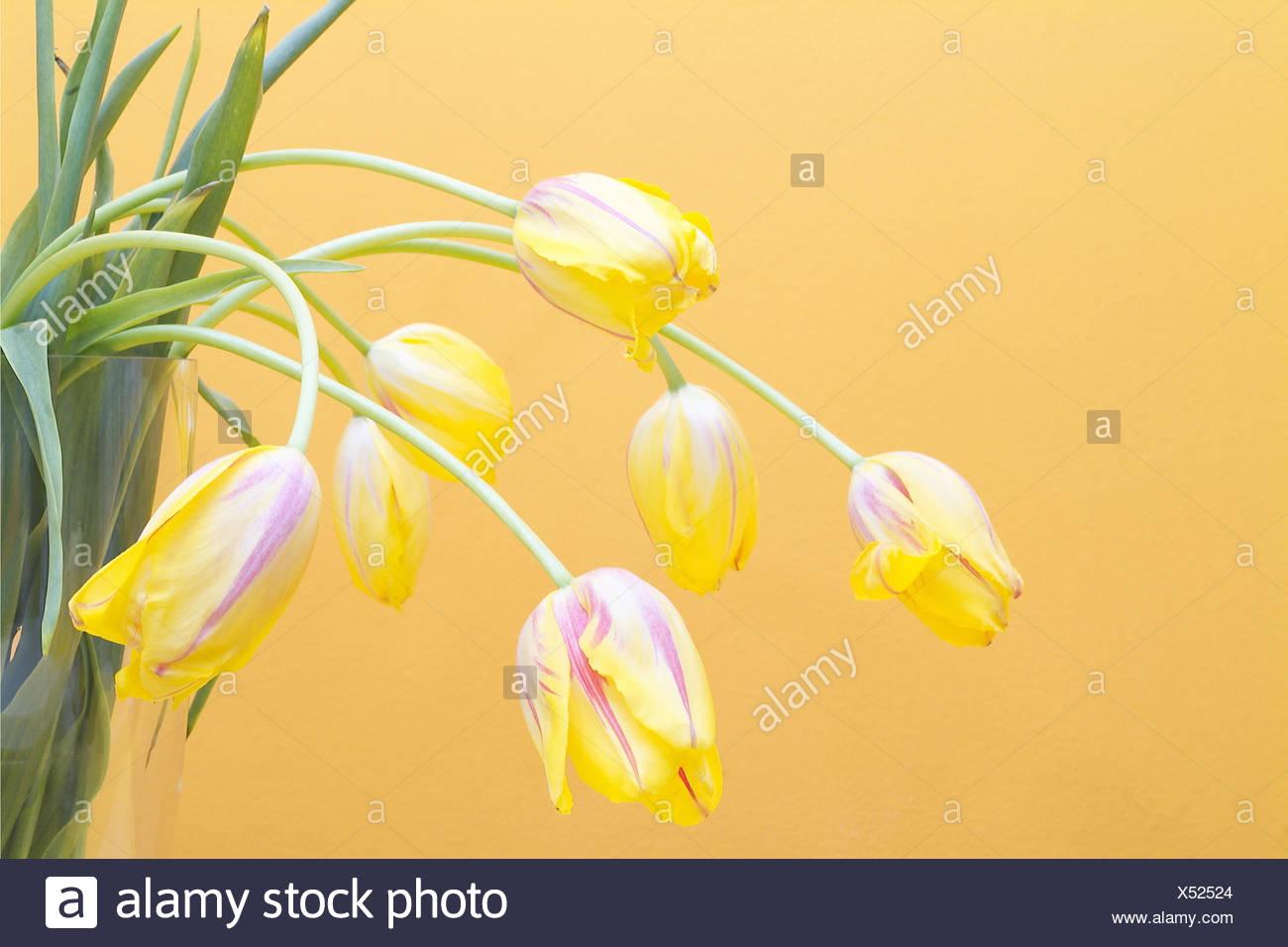 Berühmt Blumen In Der Vase Malvorlagen Galerie - Druckbare ...