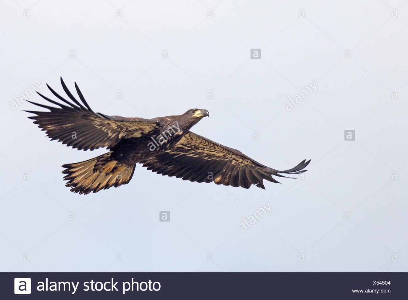 Nett Amerikanische Adler Färbung Seite Ideen - Malvorlagen Von ...