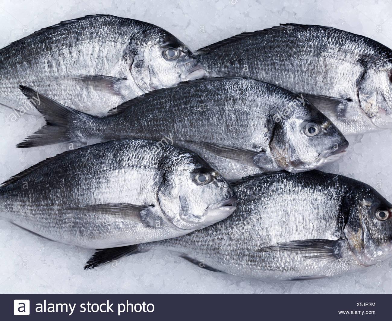Erfreut Fisch Farbseiten Zeitgenössisch - Druckbare Malvorlagen ...