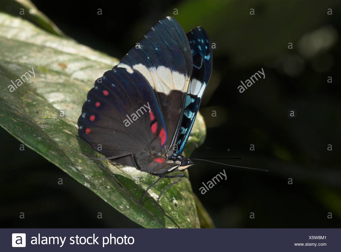 Wunderbar Süße Schmetterling Färbung Seite Galerie - Beispiel ...