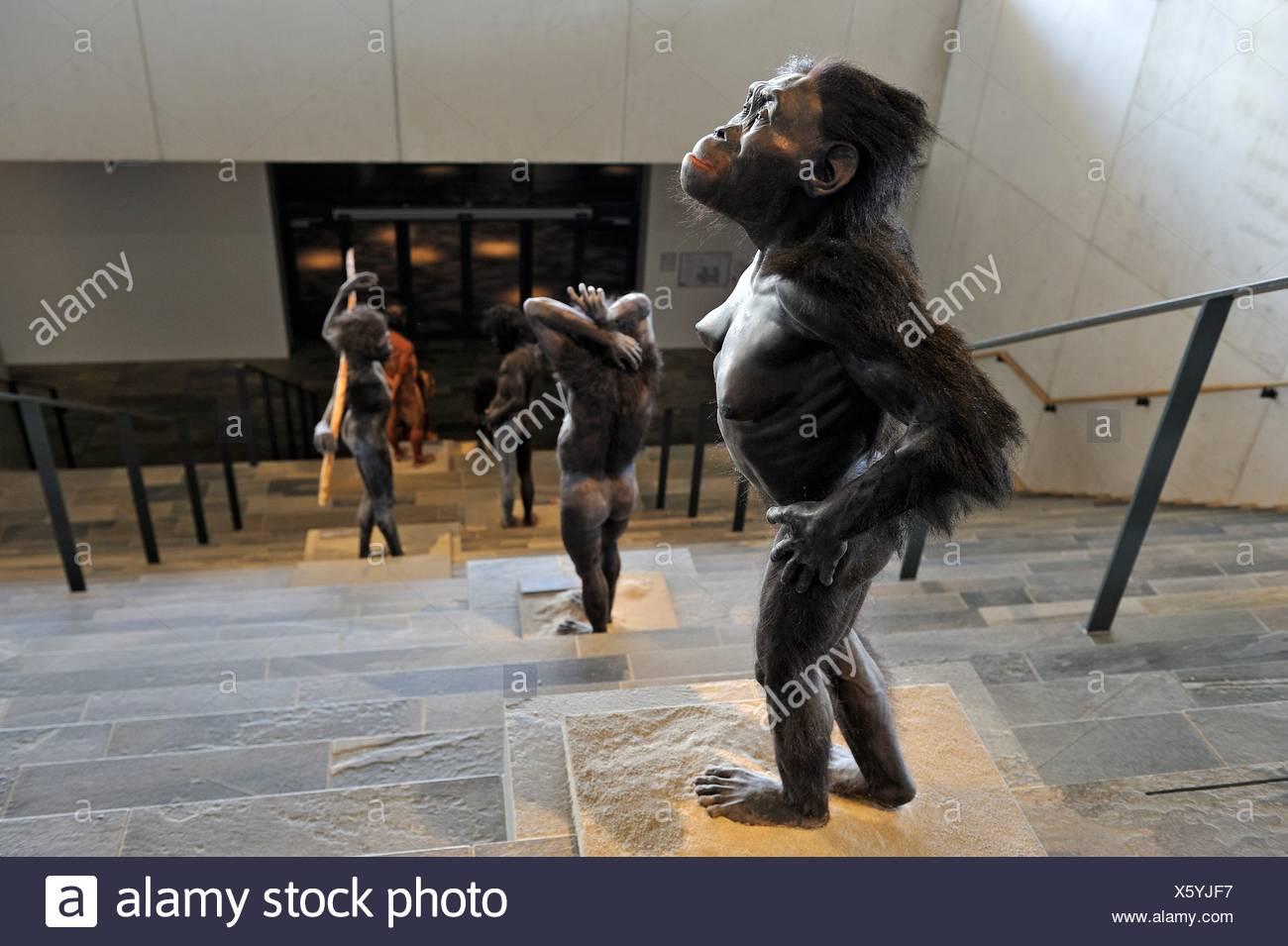 Corpus Rekonstruktion von Lucy, weibliche homininen Arten ...