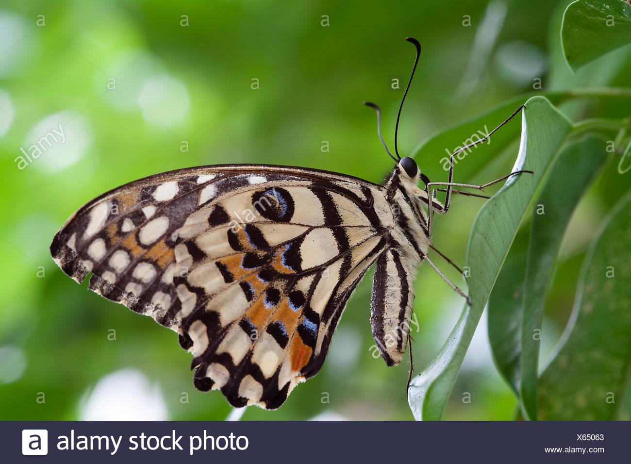Niedlich Schmetterling Farbung Seite Bilder - Malvorlagen-Ideen ...