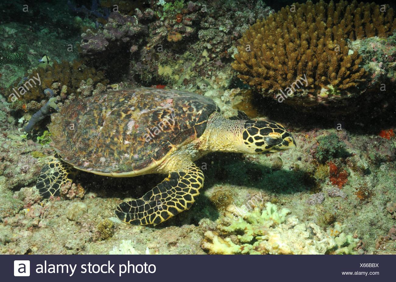 Ungewöhnlich Meeresschildkröte Färbung Seite Ideen - Malvorlagen ...