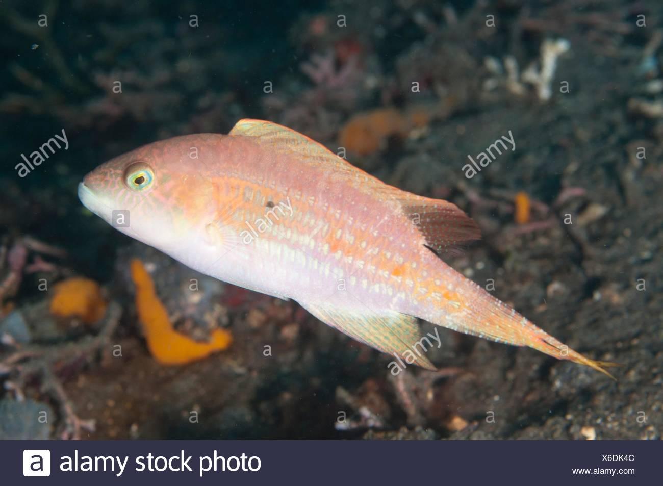 Ungewöhnlich Angler Fisch Färbung Seite Zeitgenössisch - Malvorlagen ...