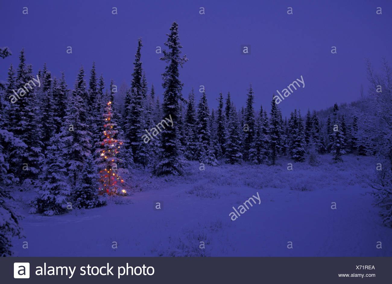 Christmas tree forest night stockfotos christmas tree for Beleuchteter tannenbaum