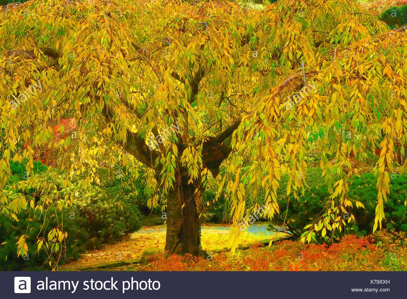 Wunderbar Herbst Färbung Seite Galerie - Entry Level Resume Vorlagen ...
