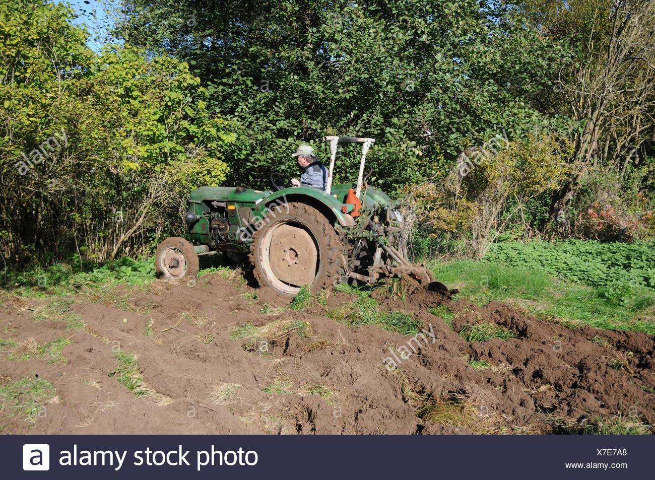 Das Pflugen Des Bodens Mit Alten Traktor Stockfoto Bild 279981584