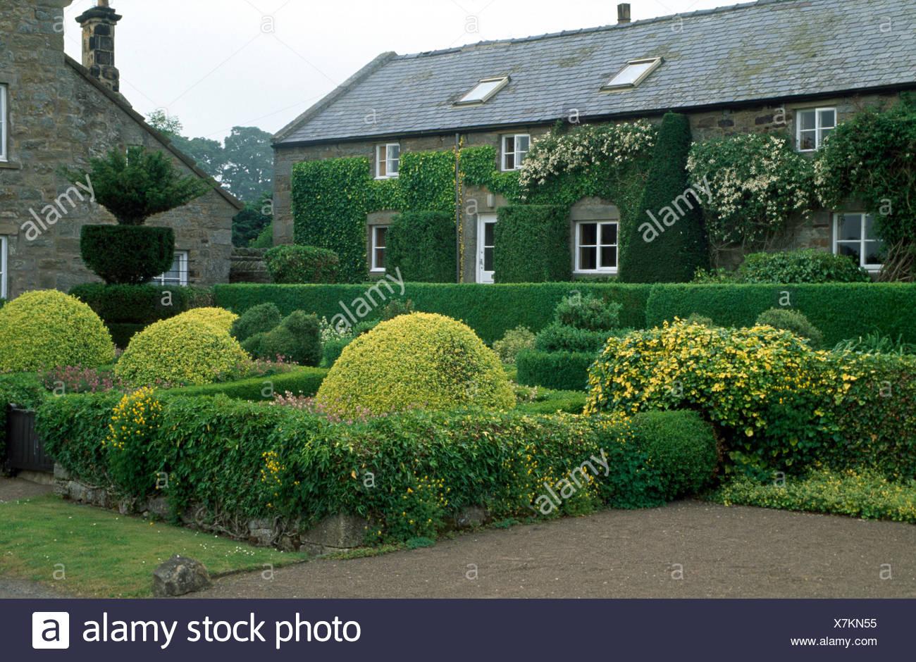 abgeschnittene sträucher und hecken im garten des landhauses mit