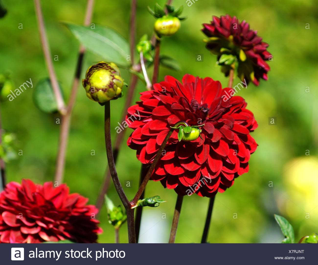 Schön Frühlingsblumen Färbung Bilder - Druckbare Malvorlagen ...