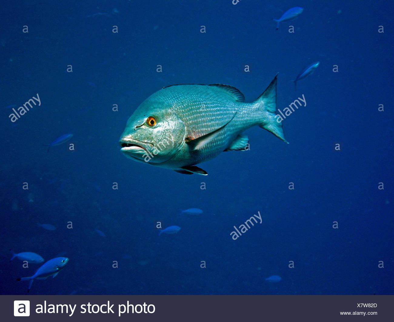 Fantastisch Meer Tier Färbung Seiten Fotos - Framing Malvorlagen ...
