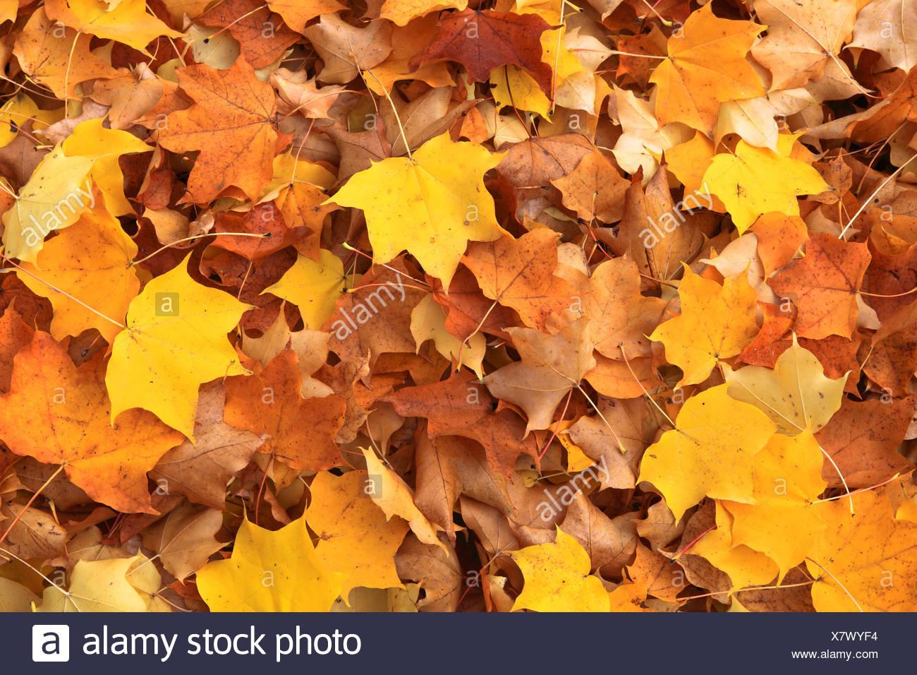 Ahorn Blatt Blatt Blatt Blatter Herbst Herbst Farbe Farben Im Herbst