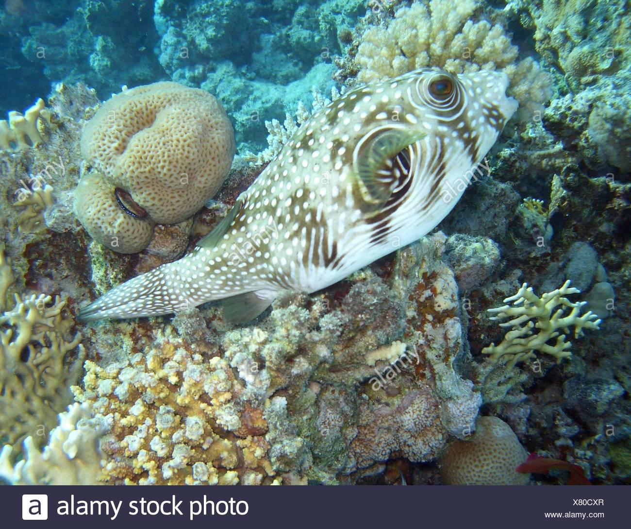 Nett Tropische Fische Färbung Seite Galerie ...