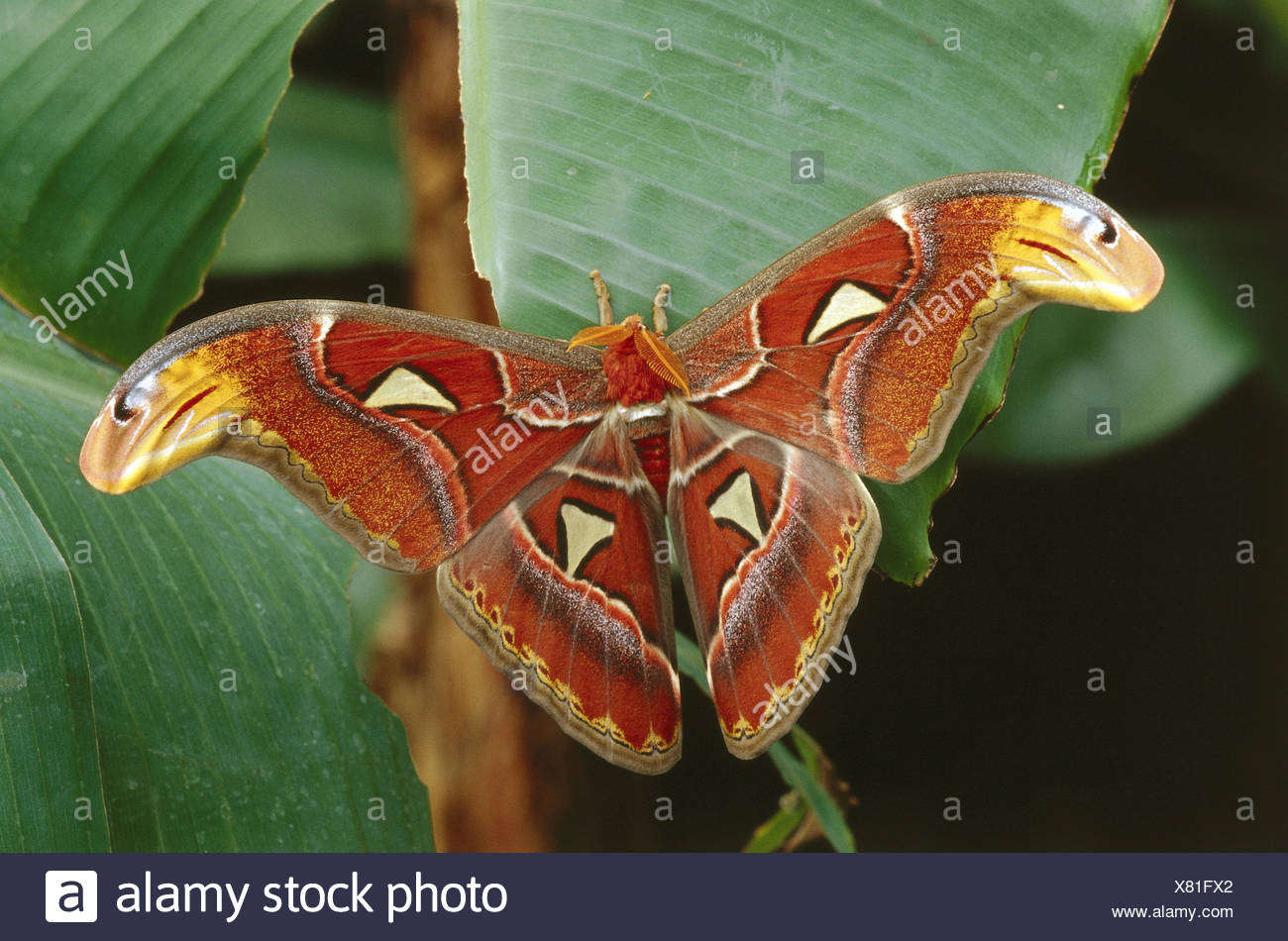 Ausgezeichnet Schmetterling Färbung Seite Ideen - Druckbare ...