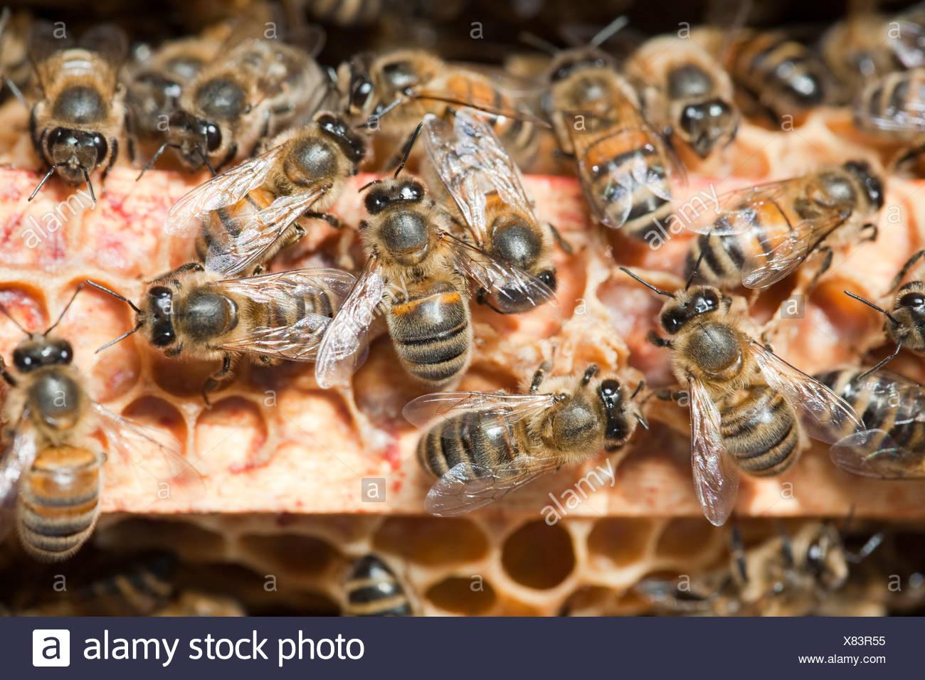 Berühmt Bumble Bee Bienenstock Färbung Seite Ideen - Druckbare ...