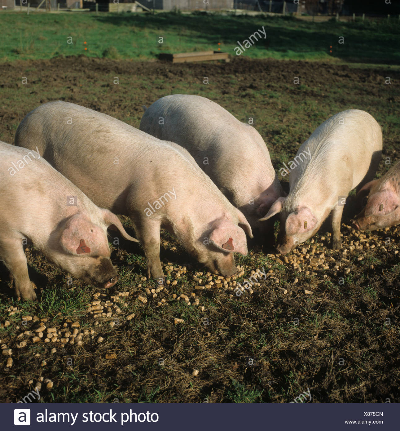 Tolle Schwein Drahtplatten Ideen - Elektrische Schaltplan-Ideen ...