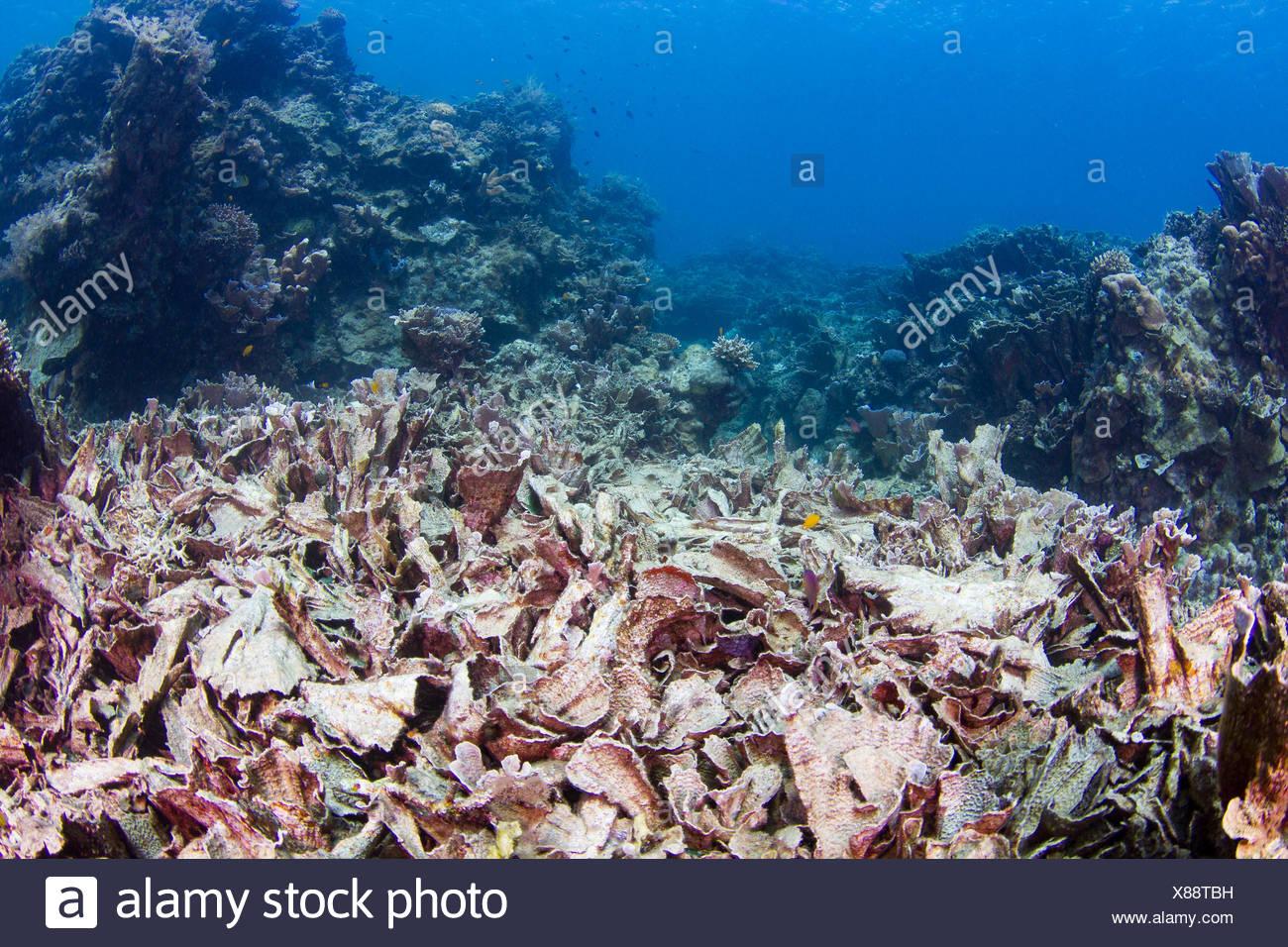 Ausgezeichnet Korallenriff Malvorlagen Zeitgenössisch - Beispiel ...