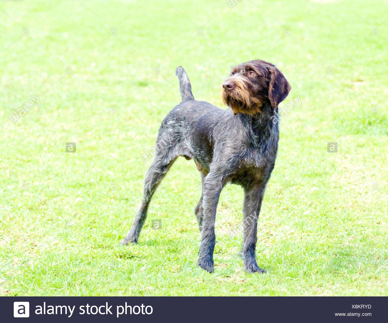 Fantastisch Beste Drahtlose Zäune Für Hunde Fotos - Elektrische ...