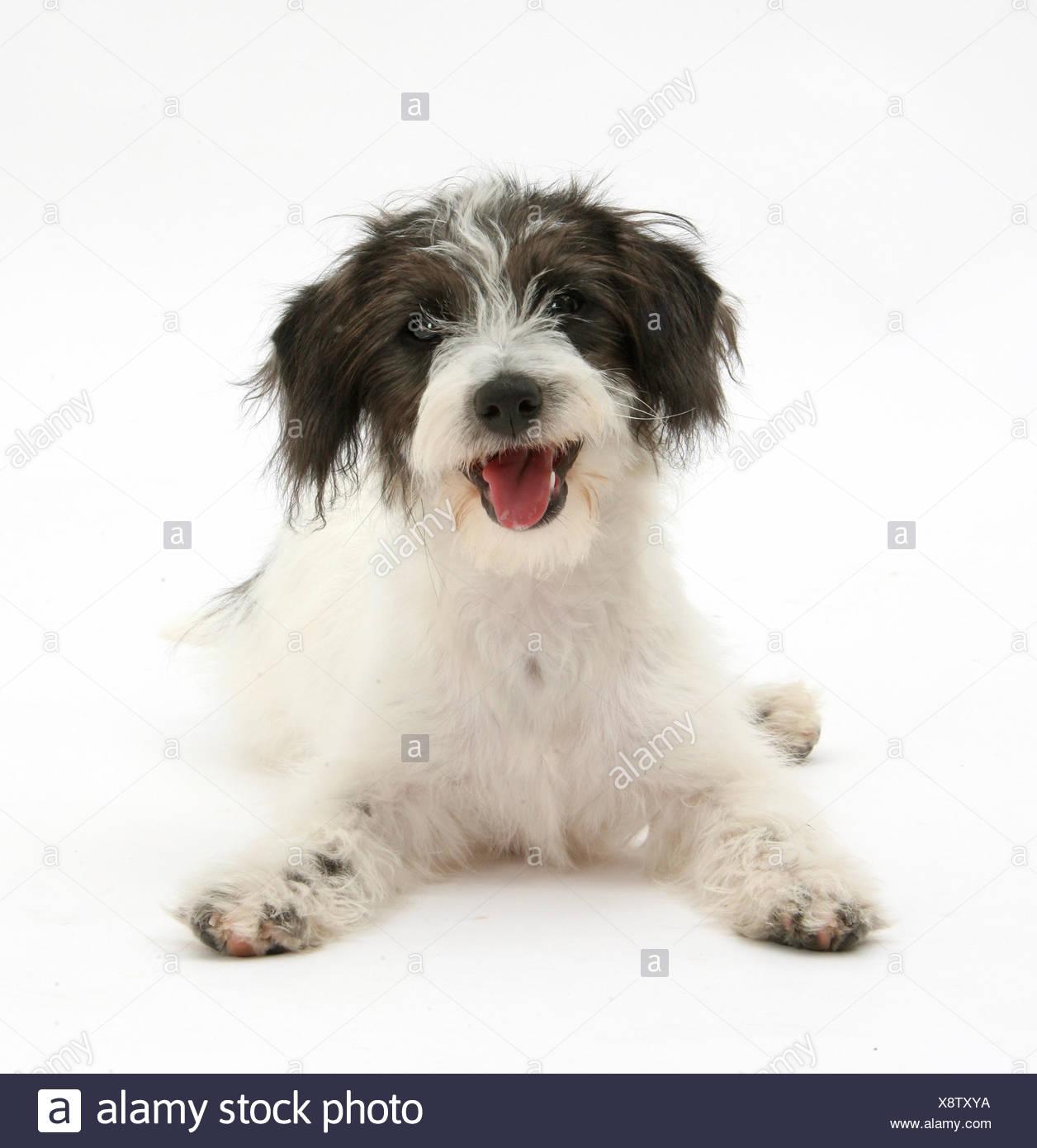 Nett Baby Bulldog Färbung Seiten Fotos - Beispiel Wiederaufnahme ...