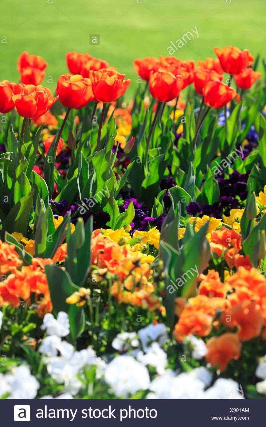 Ziemlich Druckbare Blumen Färbung Seite Bilder - Beispiel Business ...