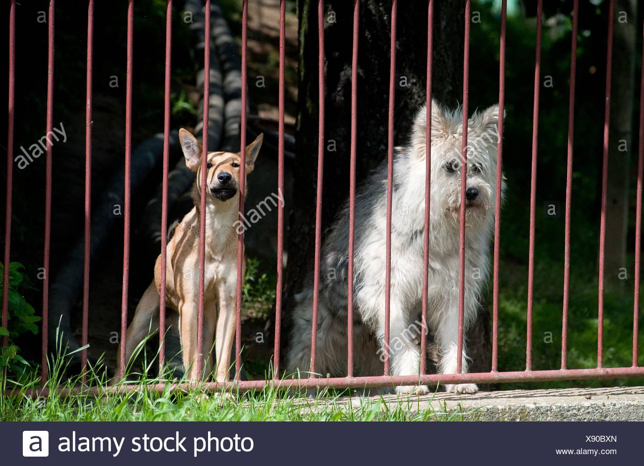 Großzügig Geschweißter Drahtzaun Für Hunde Fotos - Elektrische ...