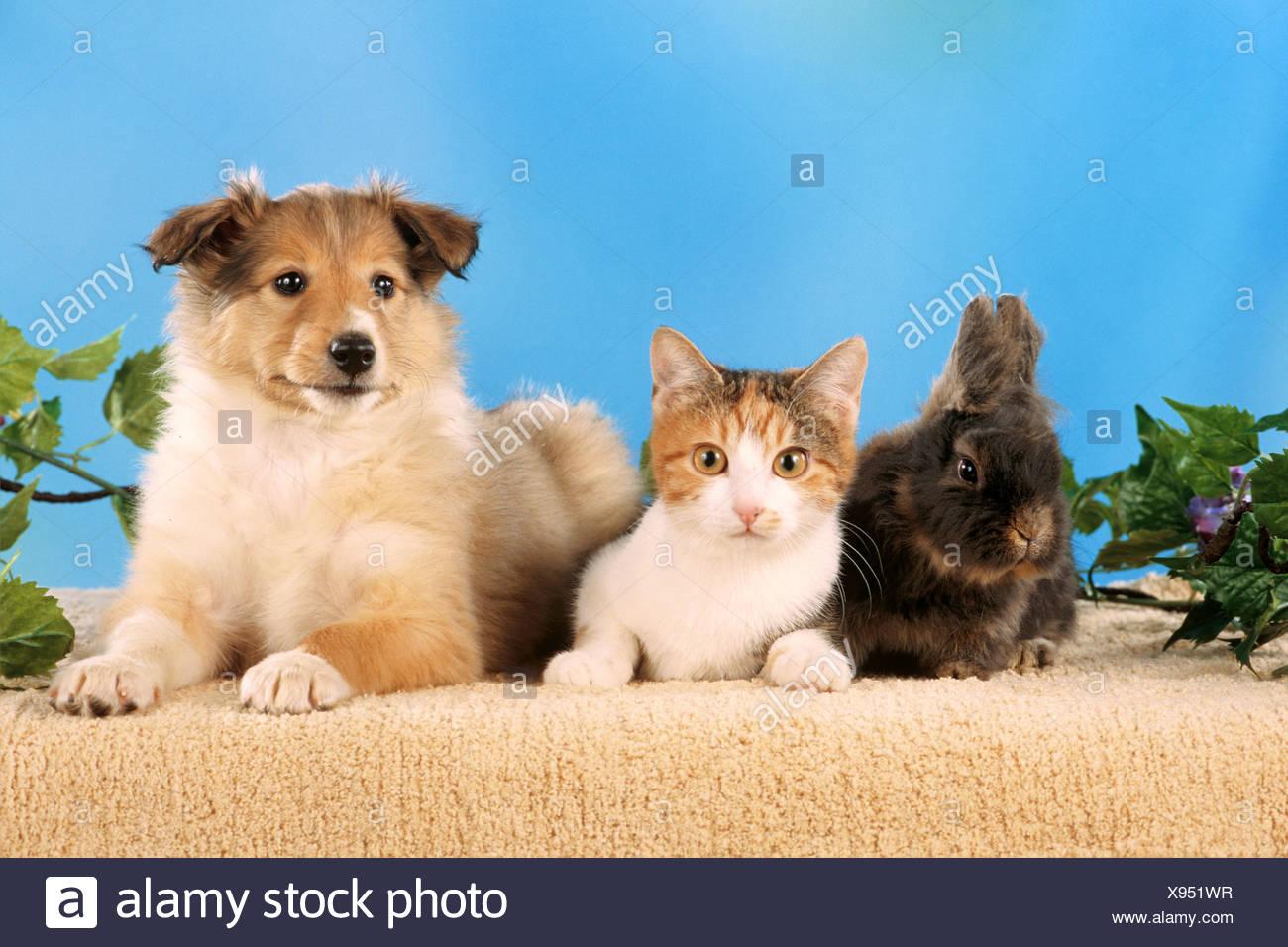 Gemütlich Süße Kätzchen Und Welpen Malvorlagen Ideen - Beispiel ...