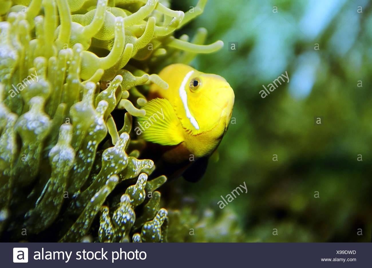 Ausgezeichnet Tropische Fische Färbung Seite Zeitgenössisch ...